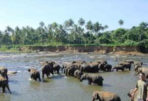ElefantenFluss3