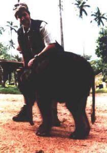 annette-elefant