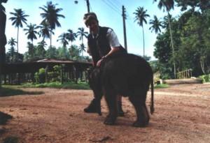 annette-elefant3