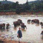 ElefantenFluss