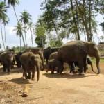 Elefanten Vorbeigang
